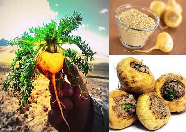 Thực phẩm nổi tiếng của người Peru cổ đại