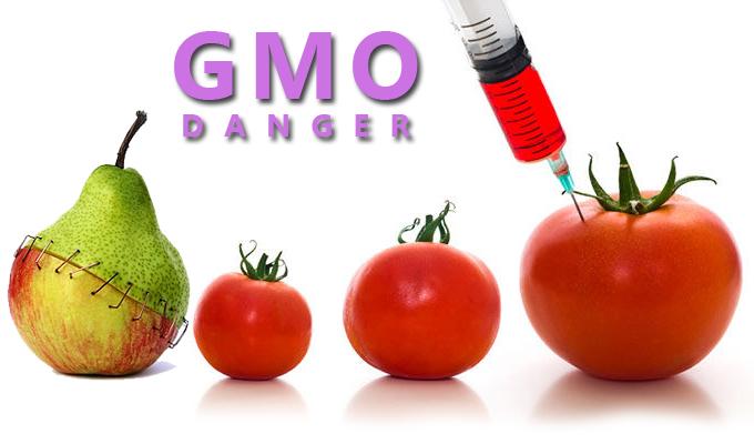 GMO là gì? và tác động của nó đến cây trồng và con người ra sao?
